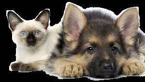 dog-and-cat-pet-sitting-edit