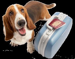 pet-vacation-boarding